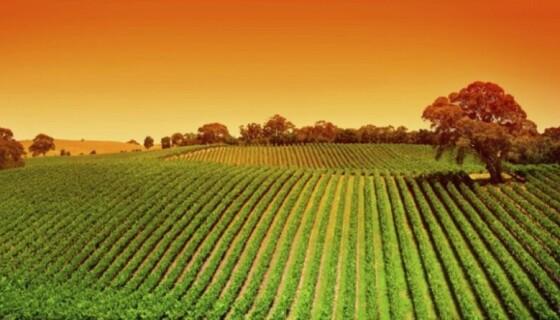 AGRICOLTURA BIOLOGICA UN BOOM DEI PRODOTTI